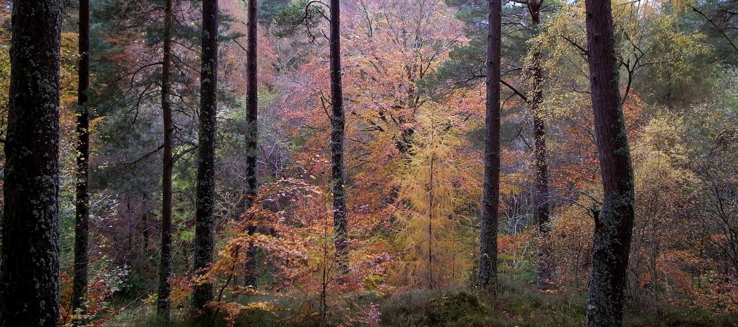 Evanton Woods, Scotland