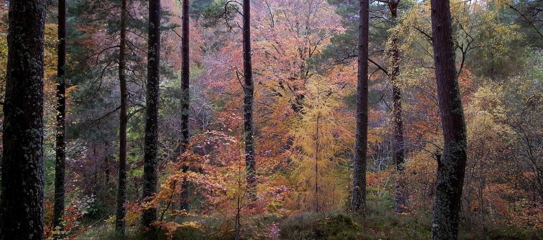 Evanton Woods, Scotland