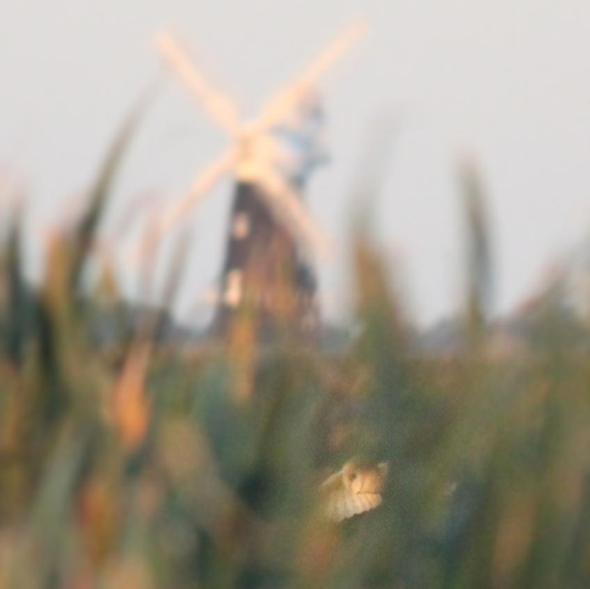 horizon landscape of windmills, sky