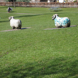 We call it the Green Sheep Park