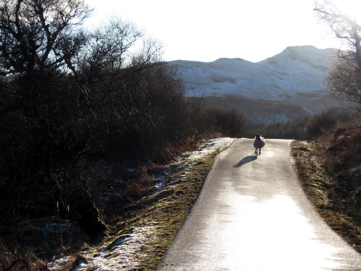 A Furry Road Block, Scotland.