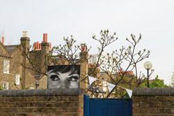 Peeking over the wall