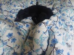Luna in bed