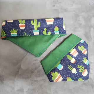 Bandana Cactus