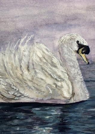 Swan Nights - Birdi Sinclair - Clair Arts