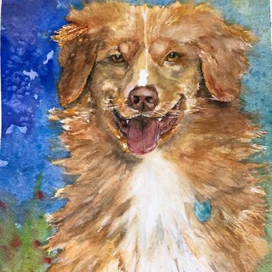 Shelby - dog portrait commission - Birdi Sinclair - Clair Arts