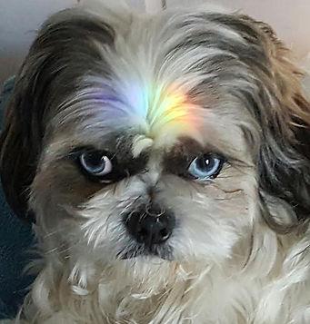 I AM The Wonder Dog, Deb Miller Psychic Medium