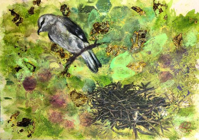 Shrike Not a Catbird - Birdi Sinclair - Clair Arts