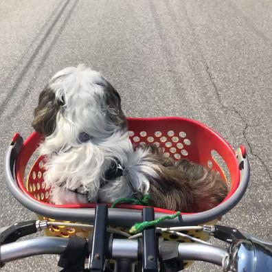 bicyclebreak - Birdi Sinclair and pup - Clair Arts.mov