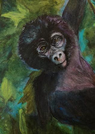 Baby Face Gorilla - Birdi Sinclair - Clair Arts
