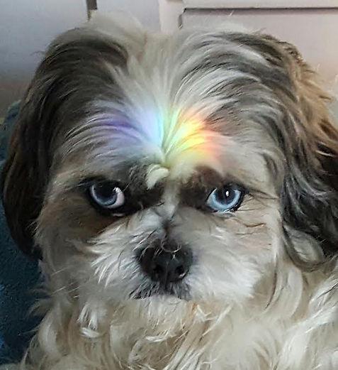 Lina Clair Dog Guru