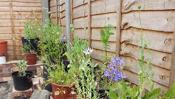Sarah Rees Garden Blog Pic 122 saving dry wildflowers.jpg