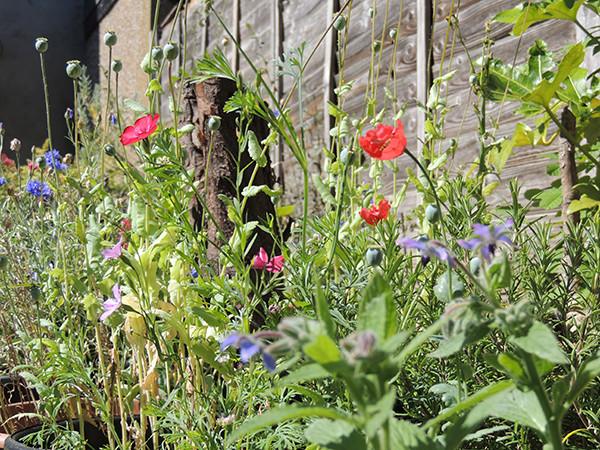 Sarah Rees Garden Blog Pic 235 wild flowers.JPG