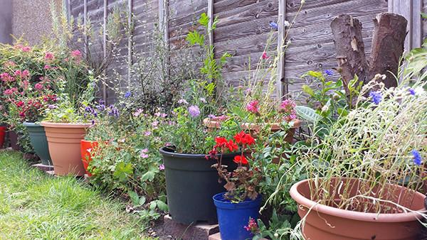 Sarah Rees Garden Blog Pic 168 wild flowers still going.jpg