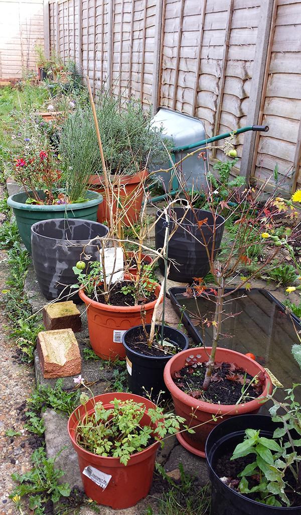 Sarah Rees Garden Blog Pic 308.jpg