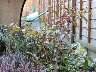 Winter Garden Chaos