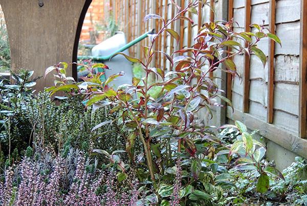 Sarah Rees Garden Blog Pic 342 b winter garden chaos.jpg