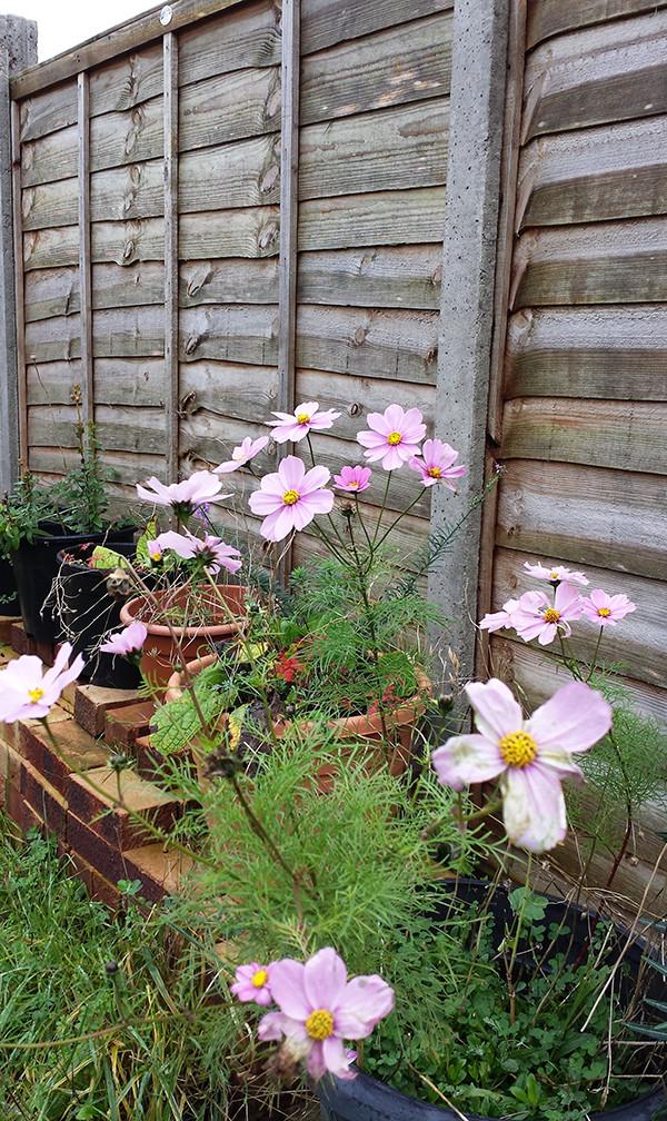 Sarah Rees Garden Blog Pic 317.jpg