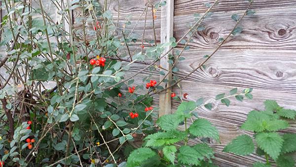 Sarah Rees Garden Blog Pic 301.jpg