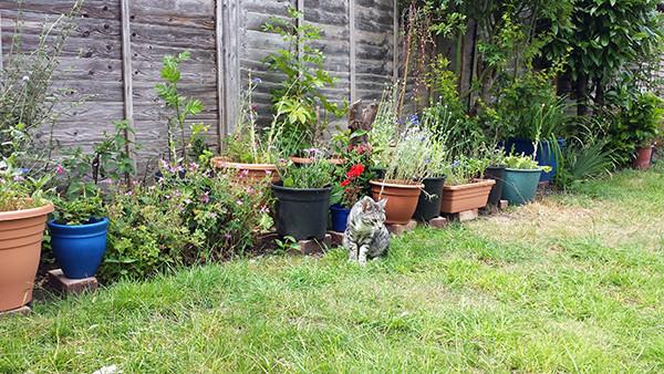 Sarah Rees Garden Blog Pic 170 cat sees grasshopper.jpg