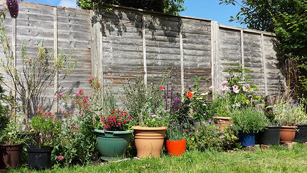 Sarah Rees Garden Blog Pic 238 cats eye view of border.jpg