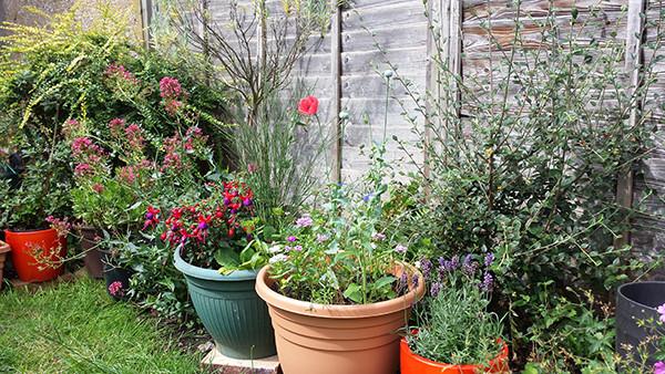 Sarah Rees Garden Blog Pic 180 flowers and bush.jpg