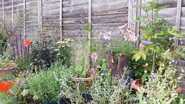 Sarah Rees Garden Blog Pic 188 new flowers into border.jpg