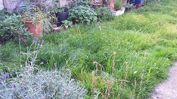 Sarah Rees Garden Blog Pic 289.jpg