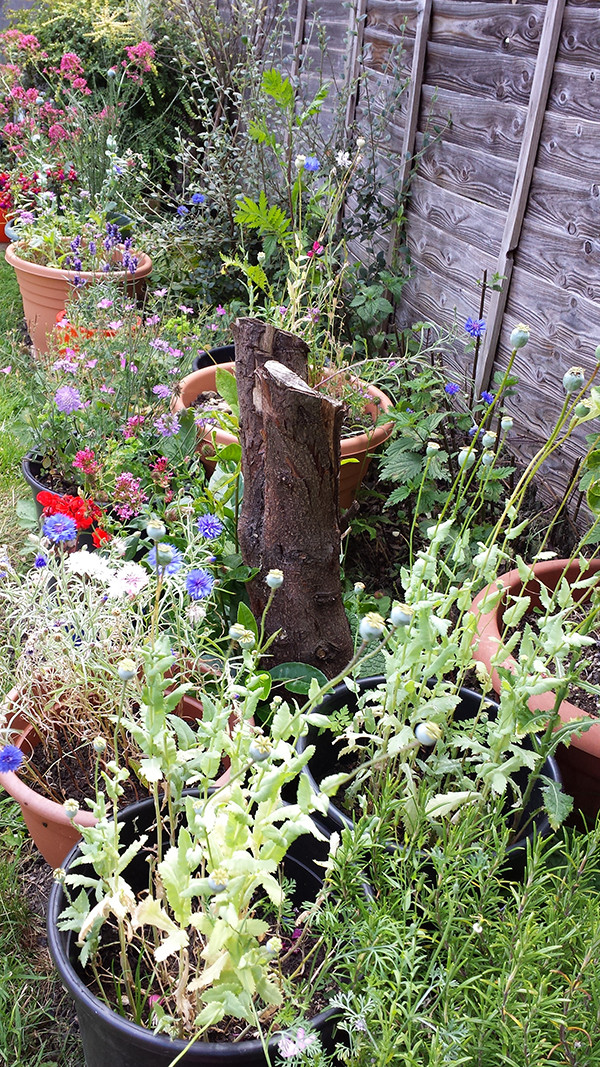 Sarah Rees Garden Blog Pic 169 Stump surrounded by flowers.jpg