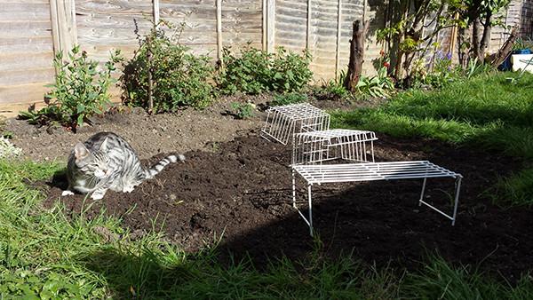Sarah Rees Garden Blog Pic 59 cat in grass seeds.jpg