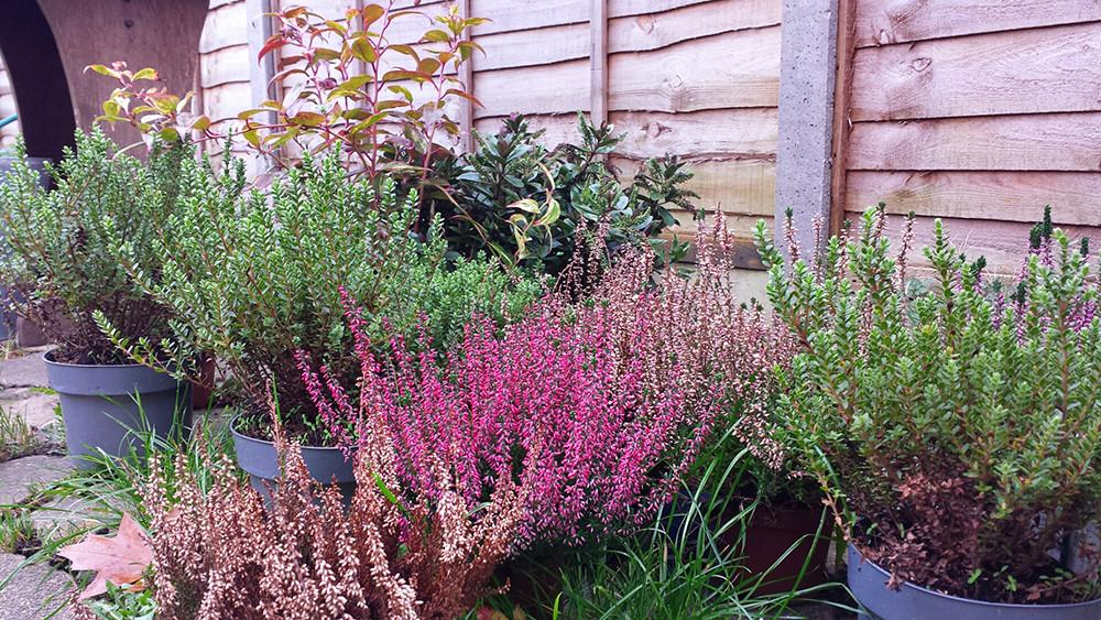 Sarah Rees Garden Blog Pic 316.jpg