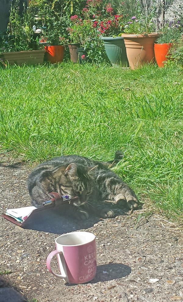 Sarah Rees Garden Blog Pic 166 cat diary.jpg