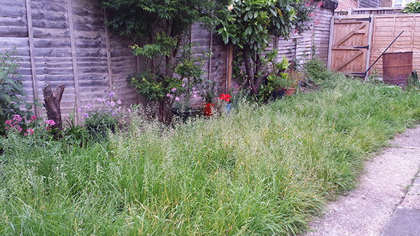 Sarah Rees Garden blog pic 102 the lawn before.jpg