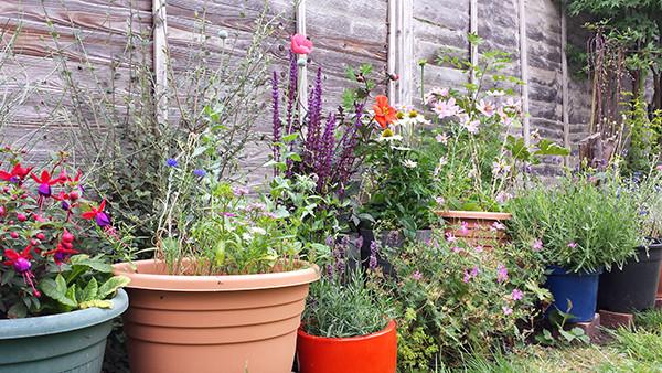 Sarah Rees Garden Blog Pic 241 colourful flower border.jpg