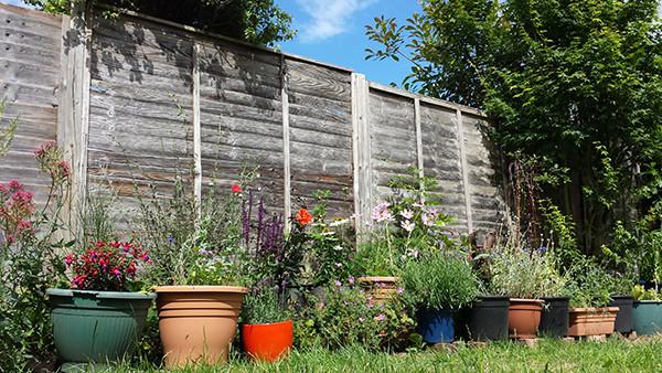 Sarah Rees Garden Blog Pic 267 flower pots.jpg