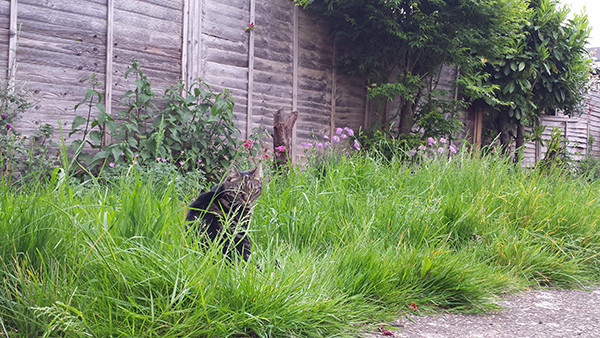 Sarah Rees Garden blog Pic 85 cat in grass.jpg