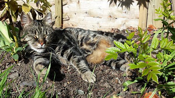 Sarah Rees Garden Blog Pic 58 cat nap.jpg