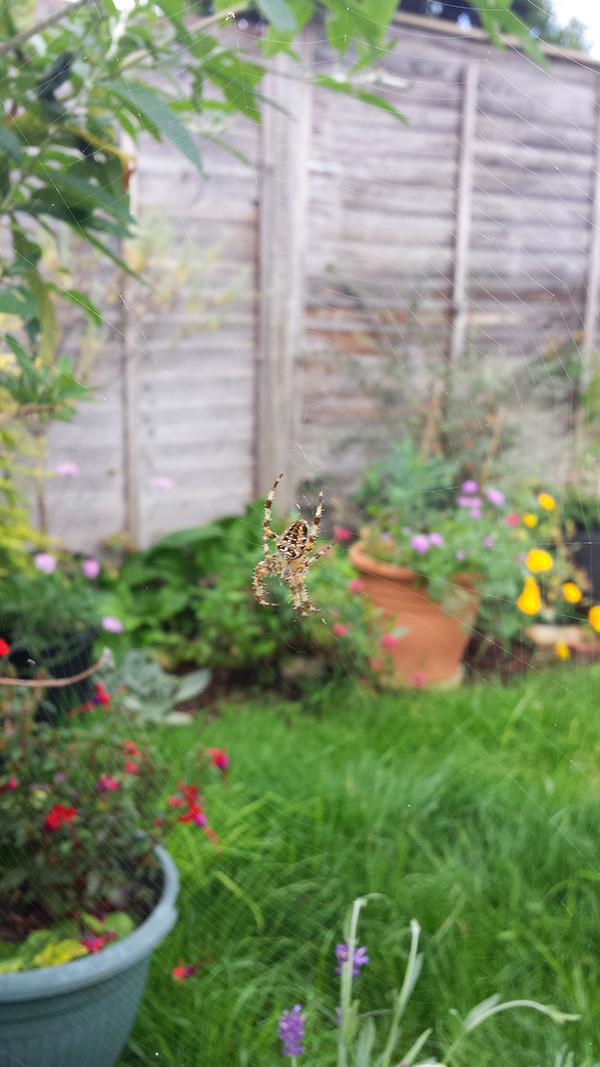 Sarah Rees Garden Blog Pic 278.jpg