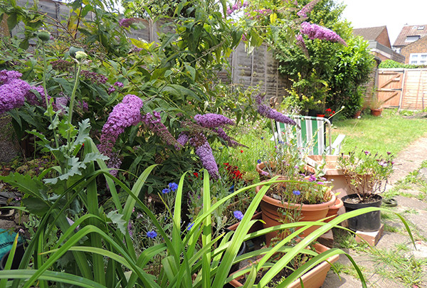 Sarah Rees Garden Blog Pic 160 deckchair.JPG