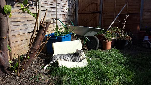 Sarah Rees Garden Blog Pic 57 cat lounging.jpg