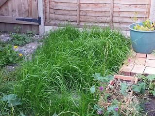 Rapid Lawn Growth