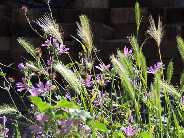 Sarah Rees Garden Blog Pic 206 grasses.JPG