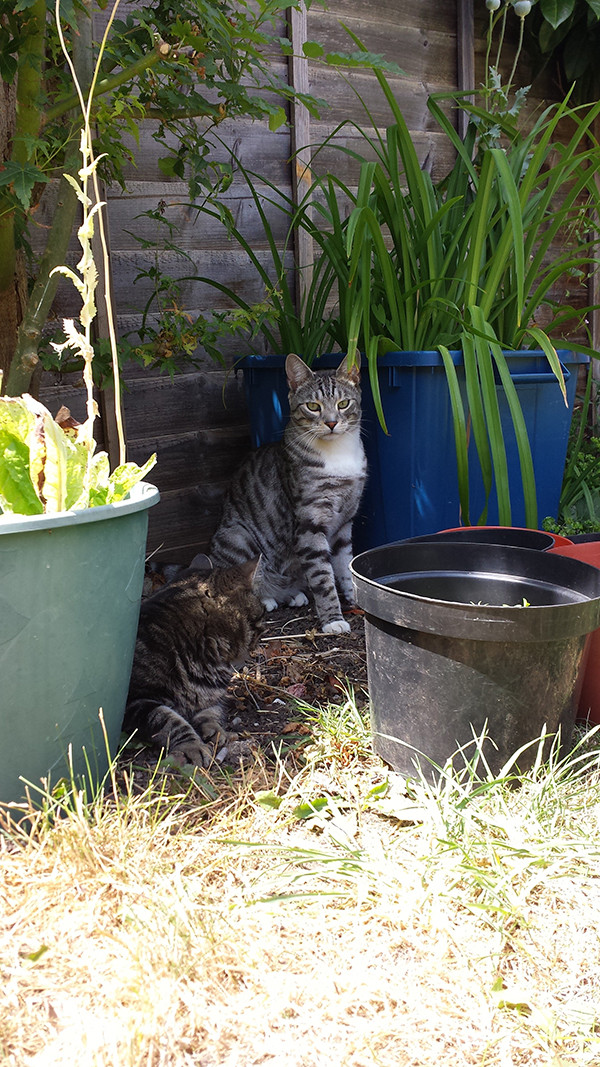 Sarah Rees Garden Blog Pic 192 shading cats and seedlings.jpg