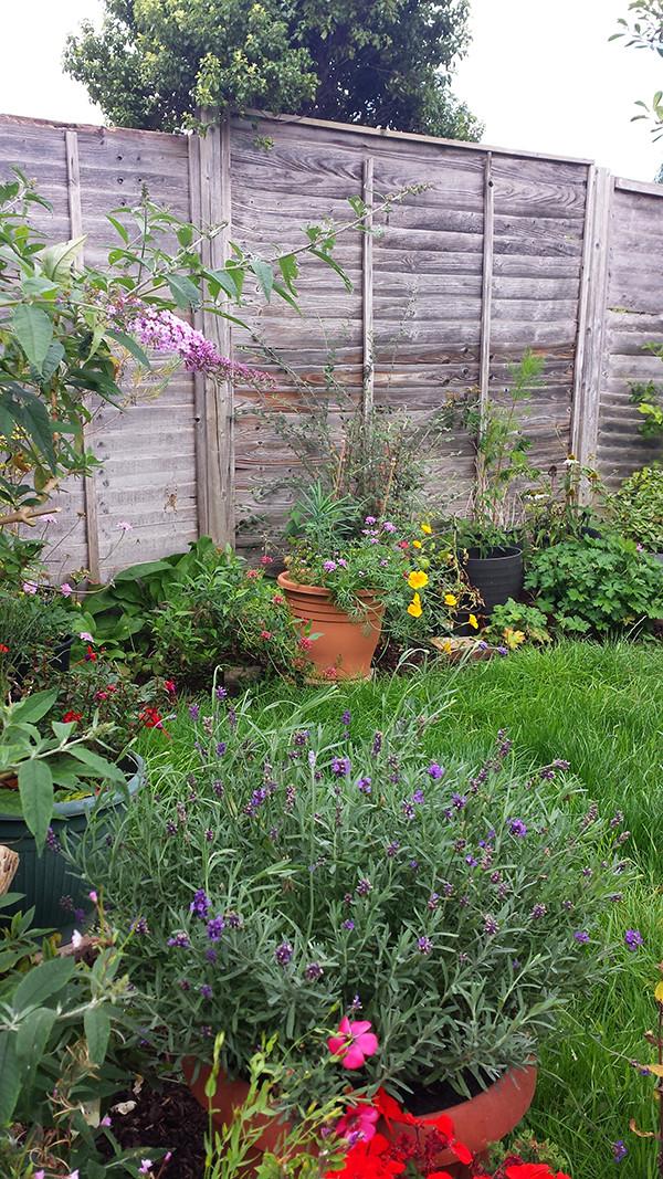 Sarah Rees Garden Blog Pic 279.jpg