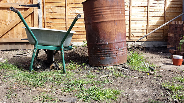 Sarah Rees Garden Blog Pic 50 The supervisor.jpg
