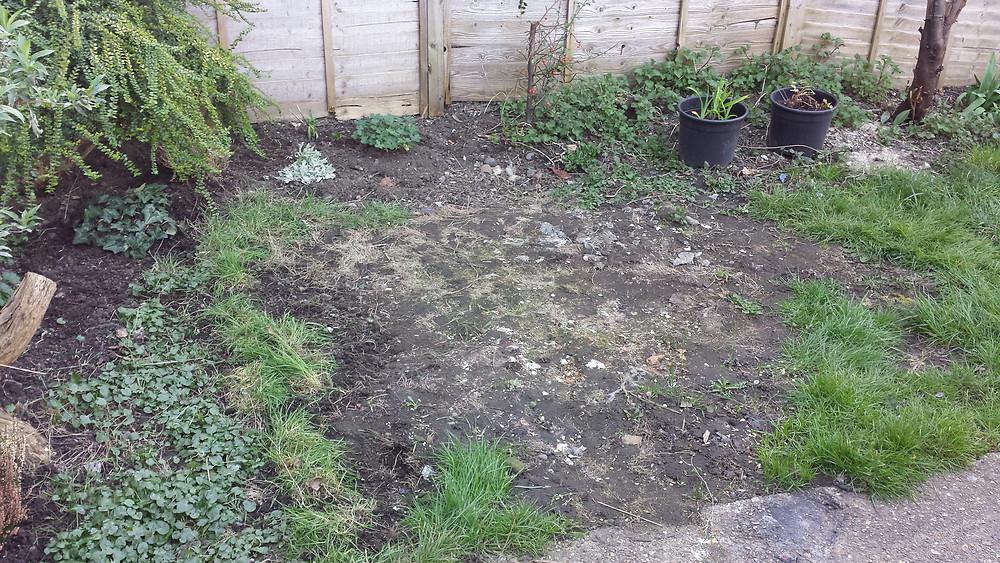 Sarah Rees Garden Blog Pic 26 lawn debris cleared.jpg