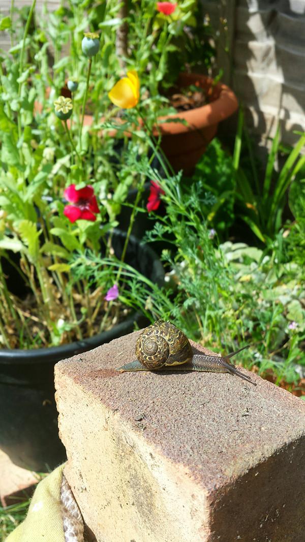 Sarah Rees Garden Blog Pic 199 snail on brick.jpg