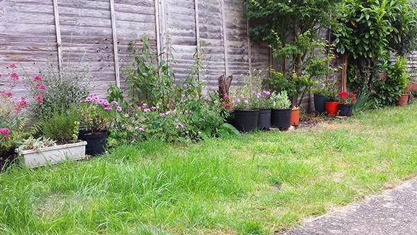 Sarah Rees Garden Blog Pic 132 lawn.jpg