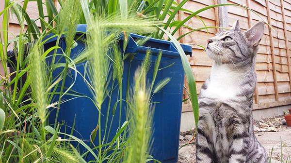 Sarah Rees Garden Blog Pic 115 cat and grass.jpg