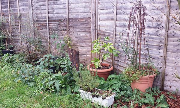 Sarah Rees Garden Blog Pic 321.jpg